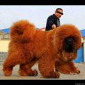 Big dog EverySax
