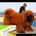 Dog regret steroids